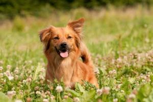 Die Praxis VitaliTier – Tiertherapie Schurig steht für Hundephysiotherapie, Hundeosteopathie, Hundesporttherapie sowie Pferdephysiotherapie und -osteopathie mit Engagemant, Leidenschaft und Kompetenz.