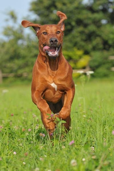 Physiotherapie für Hunde in München und Umgebung