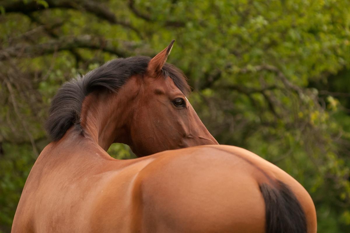 Auch im Alter noch fit, reitbar und glücklich über die Koppel wandern, das wünschen sich doch alle Pferdebesitzer. Pferdephysiotherapie kann Sie und Ihr Pferd dabei unterstützen.