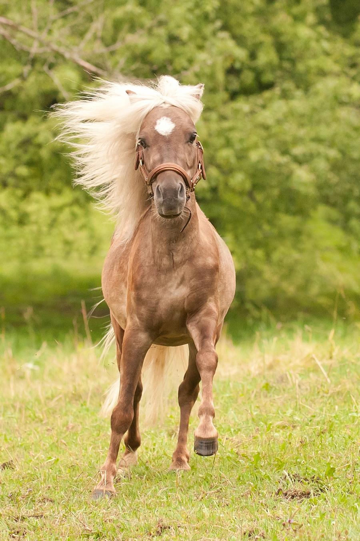 VitaliTier für Pferde: Behandlungen und Therapieformen