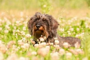 Hunde- und Pferdephysiotherapie bzw. -osteopathie kann helfen.