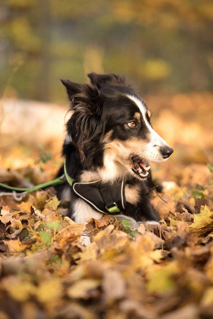 Ihr Hund ist ein Welpe/Junghund und soll schonend für Gelenke und Knochen wachsen. Ihr Hund hat Übergewicht und soll abnehmen.