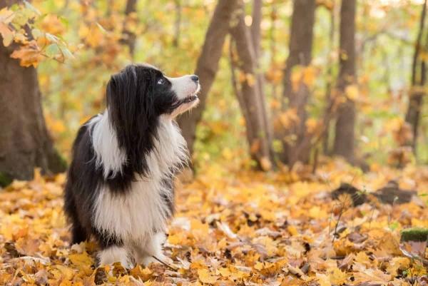 VitaliTier – Ihre Praxis für Tiertherapie