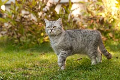 Auch Katzen können in der Praxis behandelt werden.