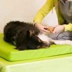 1. Leistungen: Massage / passive Mobilisation / manuelle Lymphdrainage / Wärme- und Kältetherapie