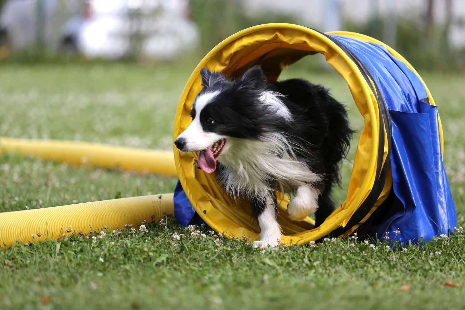 Gesund und fit im Hundesport bis ins hohe Alter! Das ist unser Ziel.