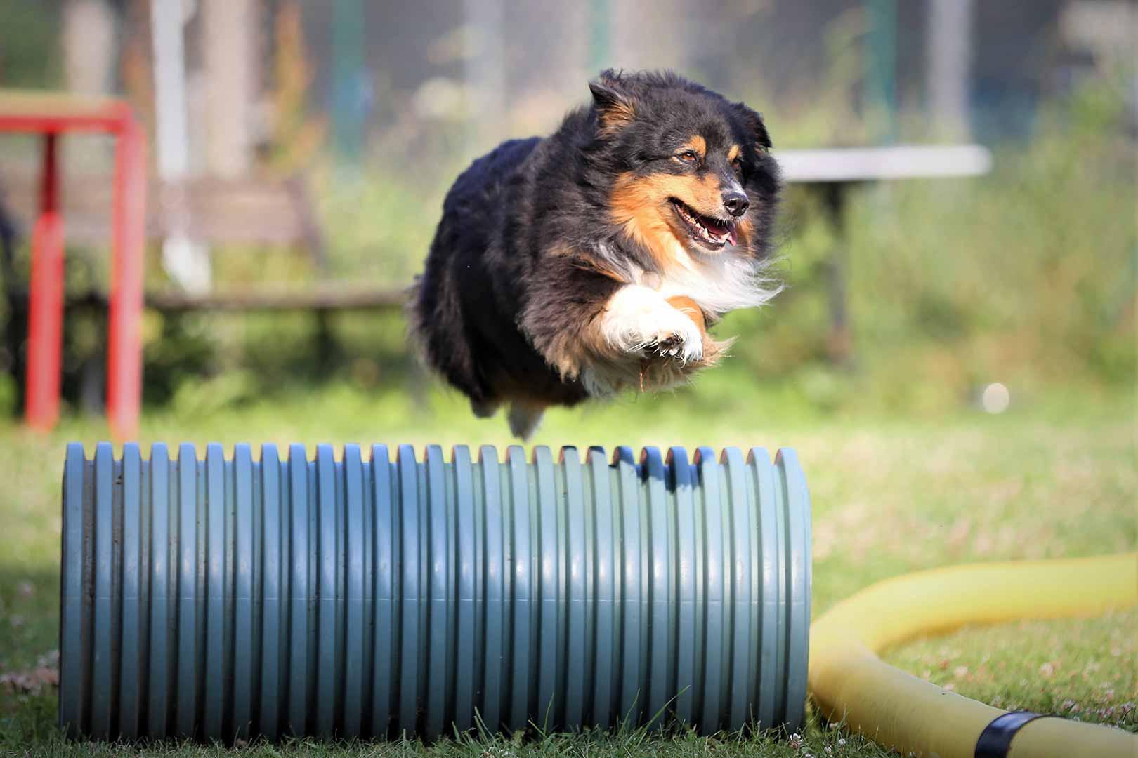 Hundesport stärkt die Bindung zwischen Halter und Hund.