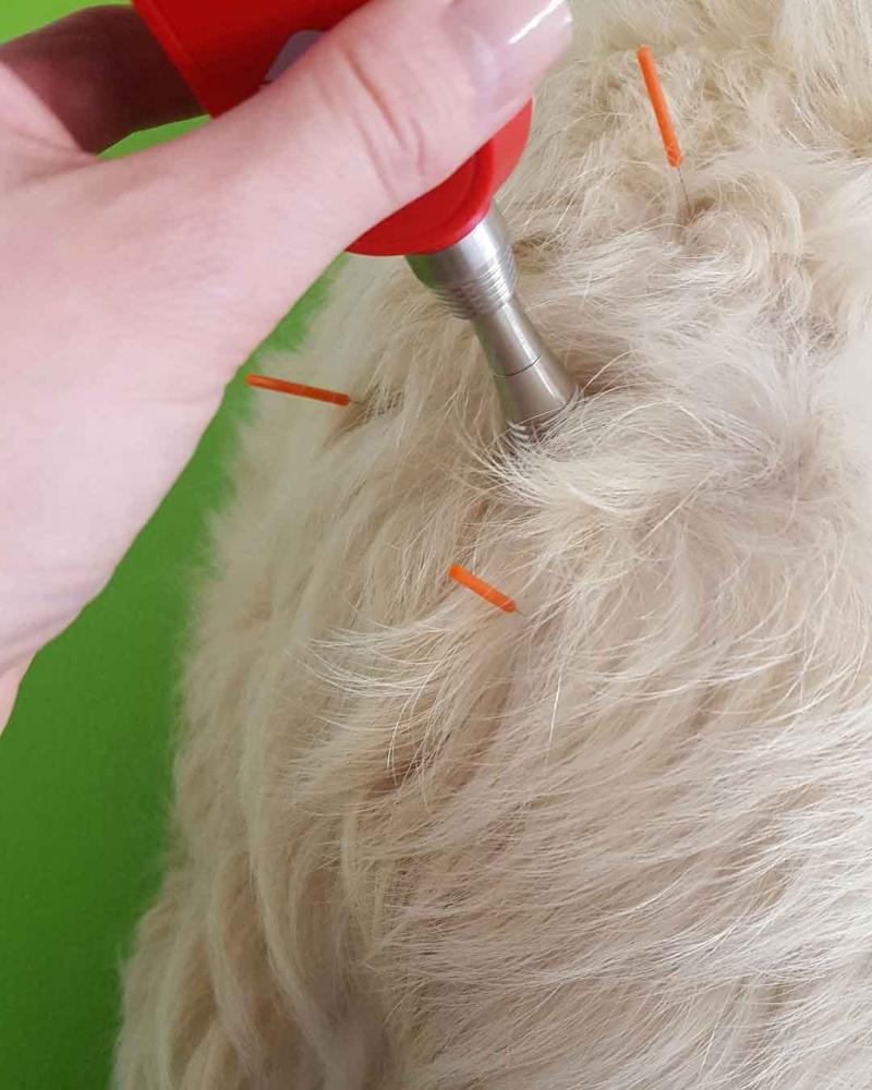 Lasertherapie und Akupunktur – ein effektive Kombination
