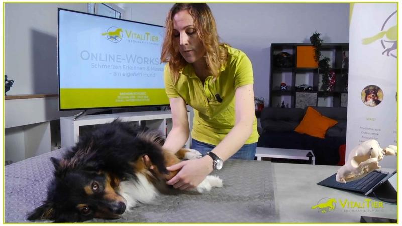 Schmerzen erkennen und Massagen am eigenen Hund