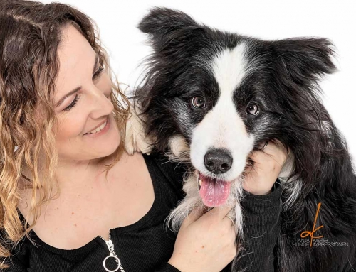 6 Tipps für Senioren – Quick-Tipps für Hunde, Pferde und Katzen von VitaliTier