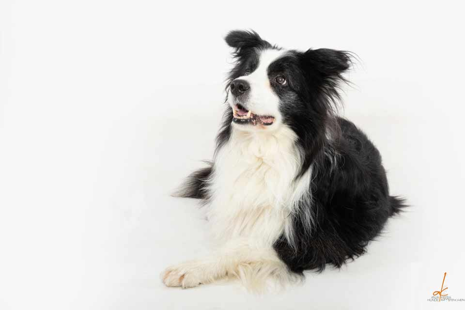 Quick-Tipps – 6 Tipps für Senioren-Hunde